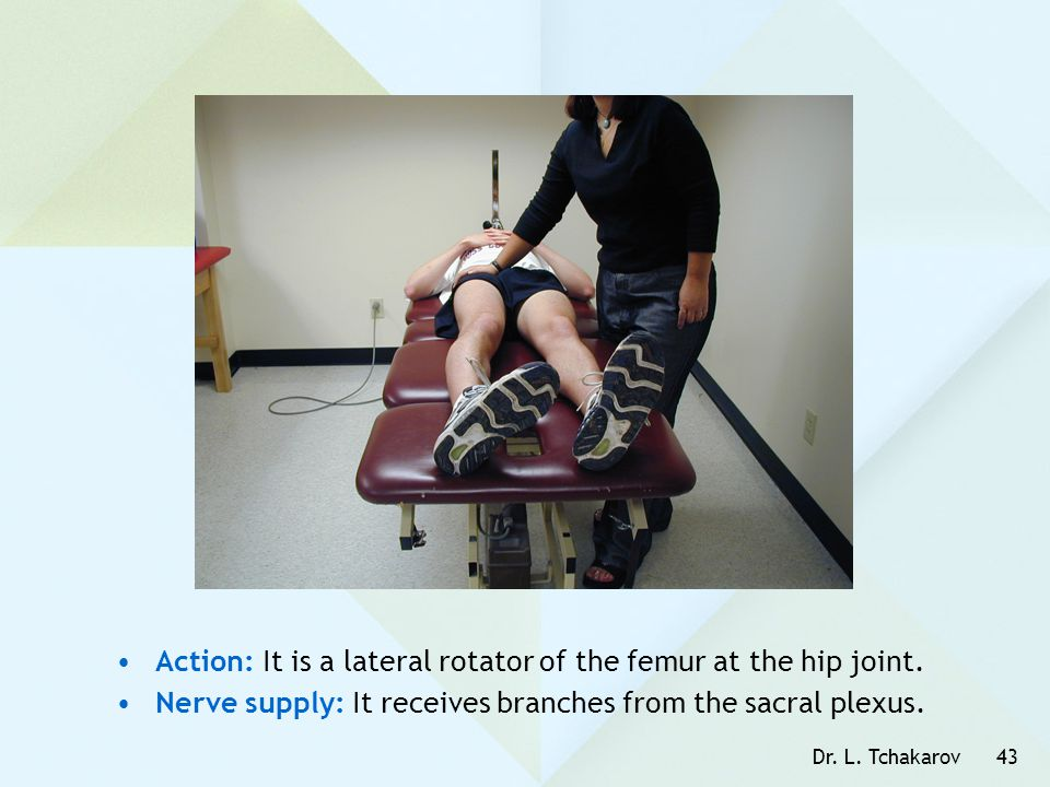 Action: It is a lateral rotator of the femur at the hip joint.