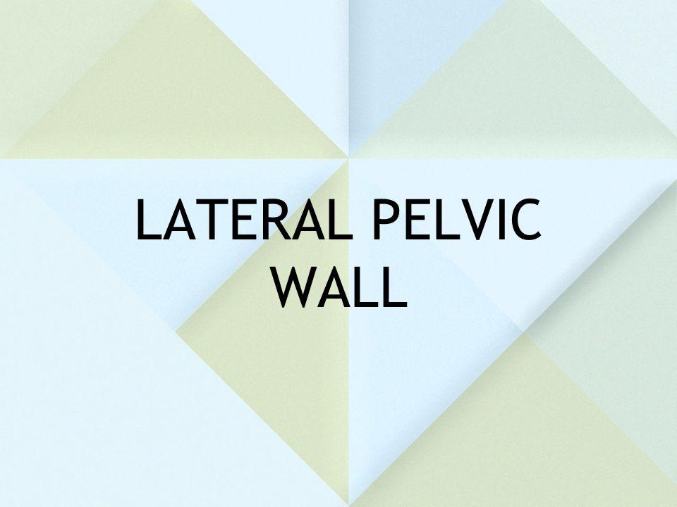 LATERAL PELVIC WALL