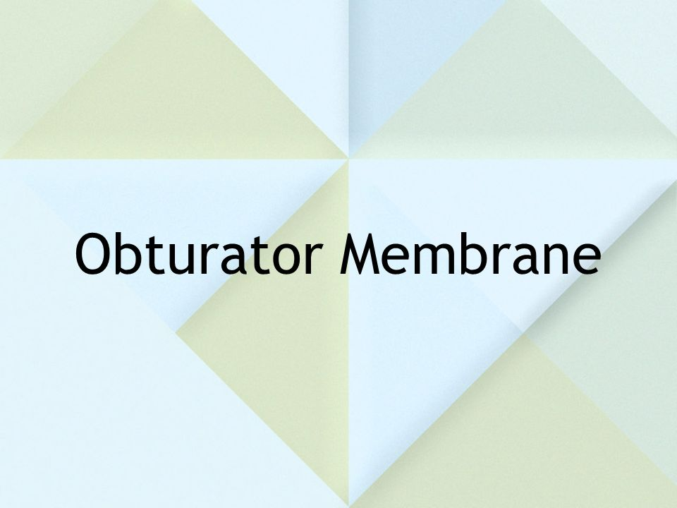 Obturator Membrane