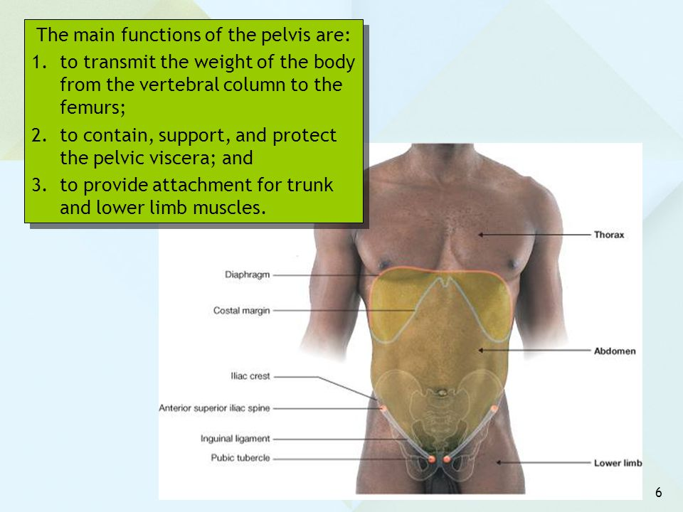 The main functions of the pelvis are: