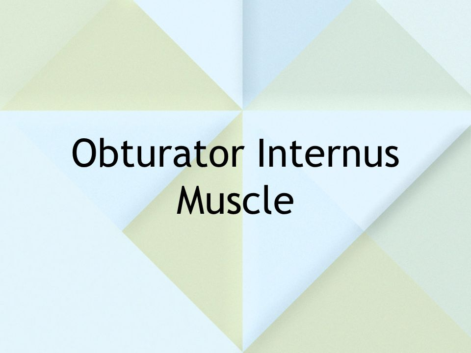 Obturator Internus Muscle
