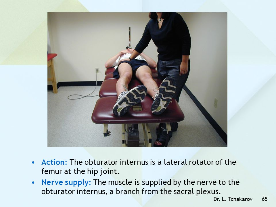 Action: The obturator internus is a lateral rotator of the femur at the hip joint.