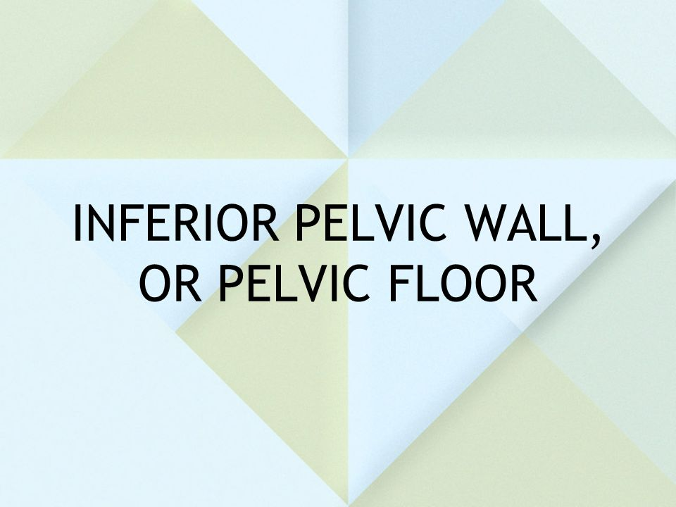 INFERIOR PELVIC WALL, OR PELVIC FLOOR