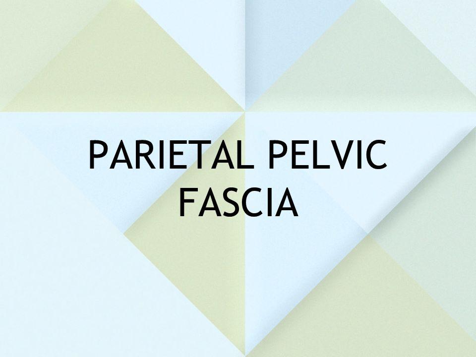 PARIETAL PELVIC FASCIA