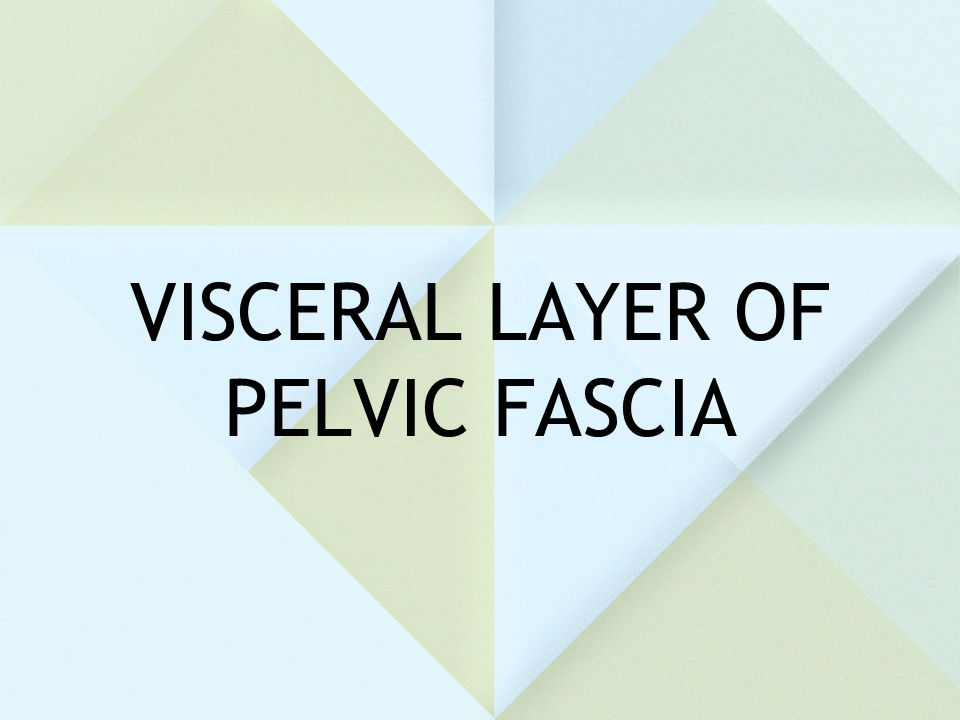 VISCERAL LAYER OF PELVIC FASCIA