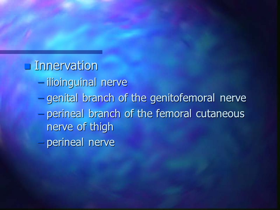 Innervation ilioinguinal nerve