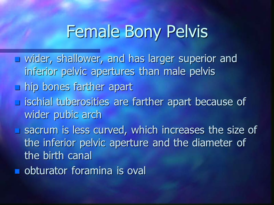Female Bony Pelvis wider, shallower, and has larger superior and inferior pelvic apertures than male pelvis.