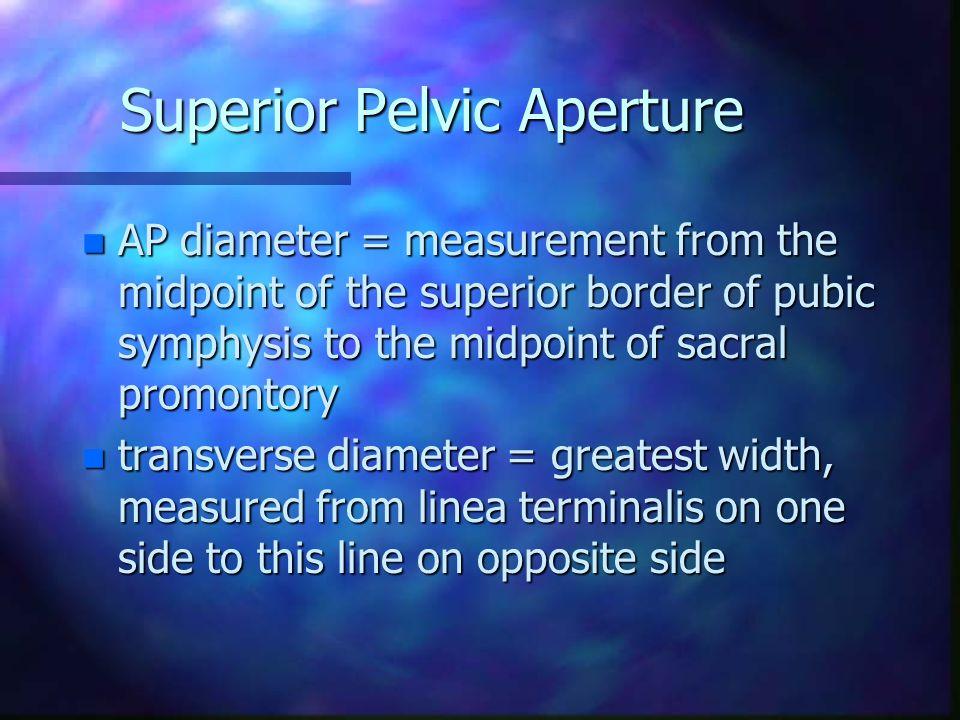 Superior Pelvic Aperture