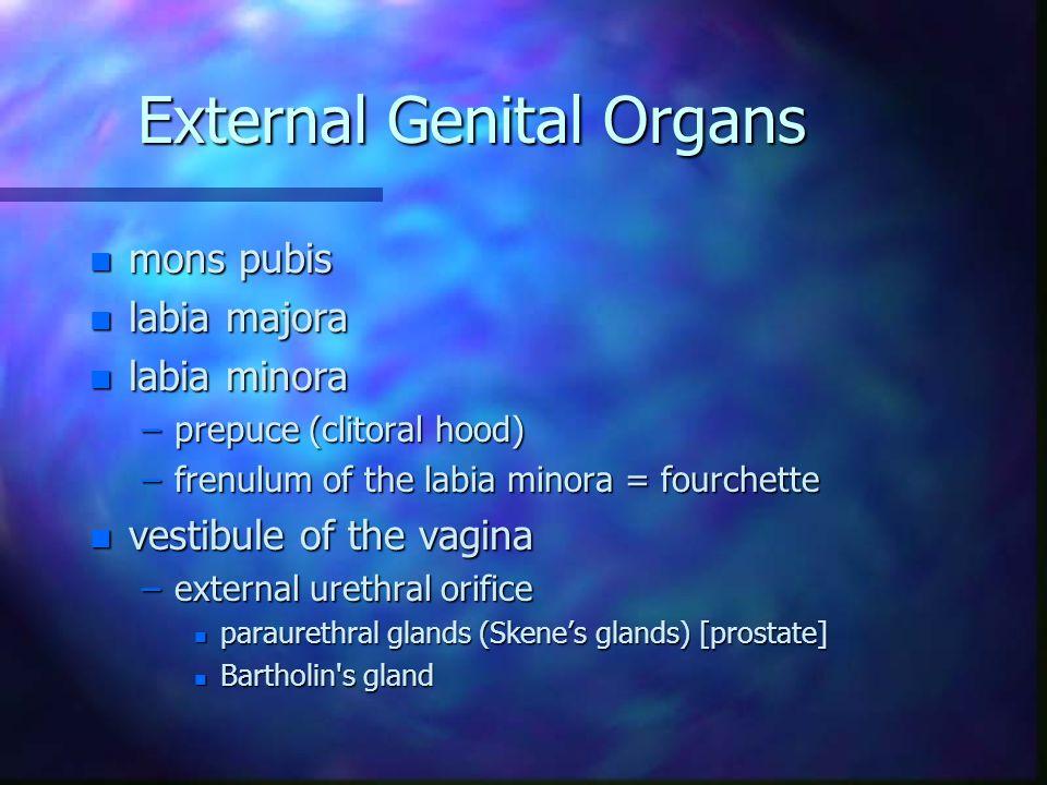 External Genital Organs