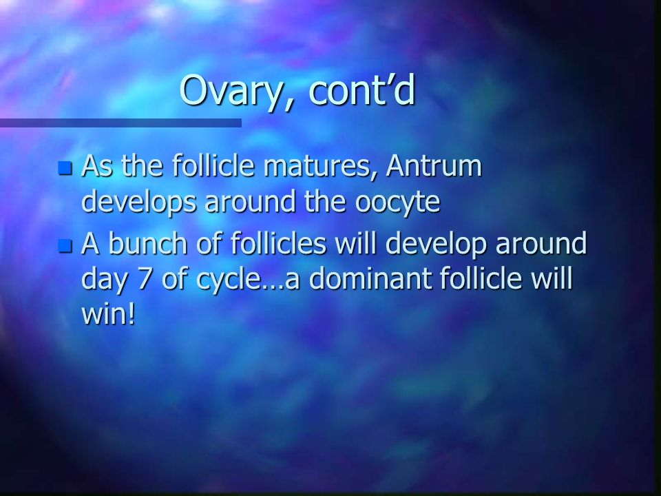 Ovary, cont'd As the follicle matures, Antrum develops around the oocyte.
