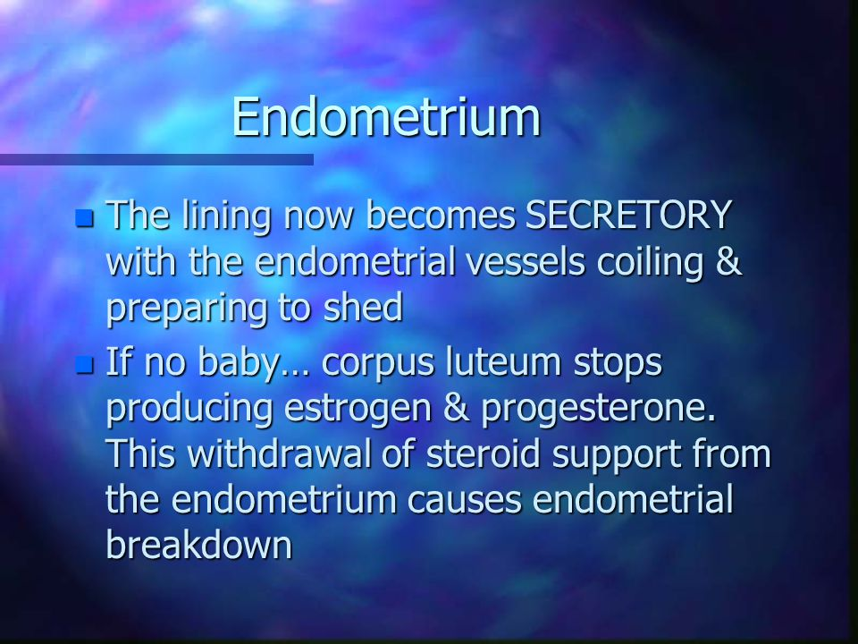 Endometrium The lining now becomes SECRETORY with the endometrial vessels coiling & preparing to shed.