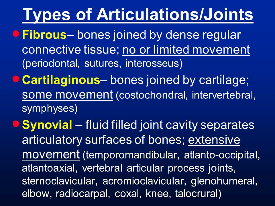Types of Articulations/Joints
