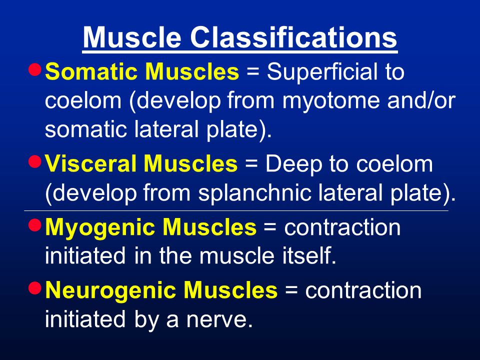 Muscle Classifications
