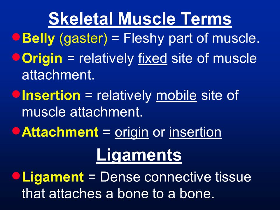 Skeletal Muscle Terms Ligaments