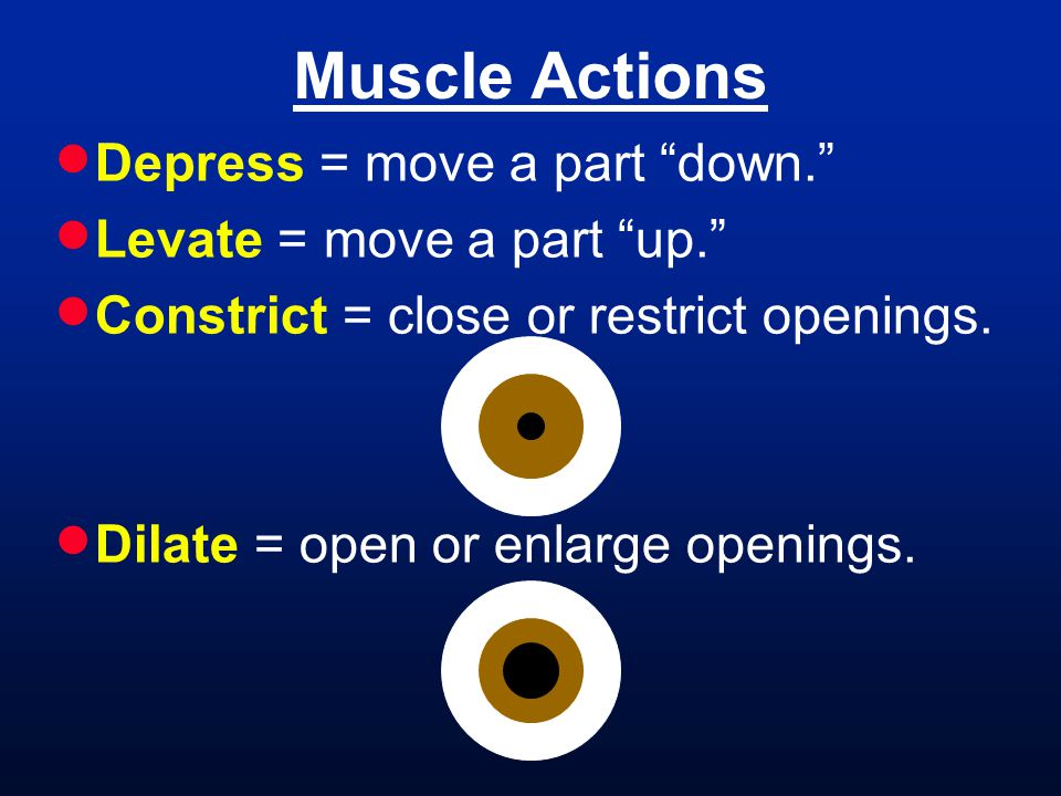 Muscle Actions Depress = move a part down.