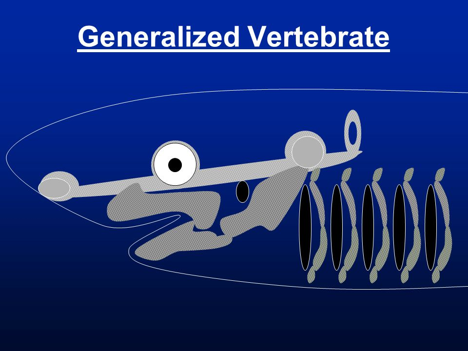 Generalized Vertebrate