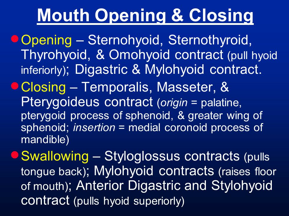 Mouth Opening & Closing