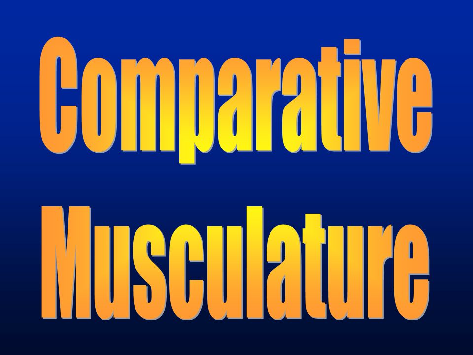 Comparative Musculature