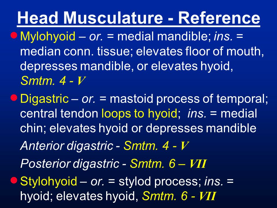 Head Musculature - Reference