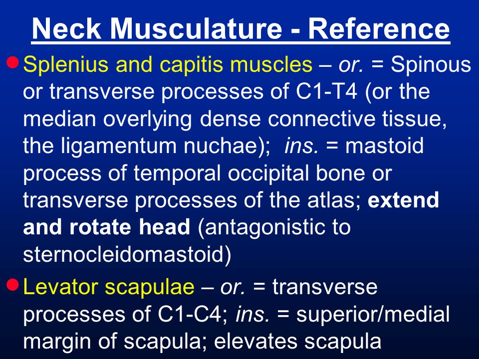 Neck Musculature - Reference