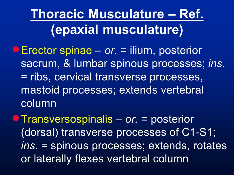 Thoracic Musculature – Ref. (epaxial musculature)