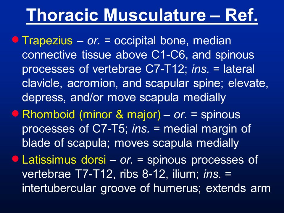 Thoracic Musculature – Ref.
