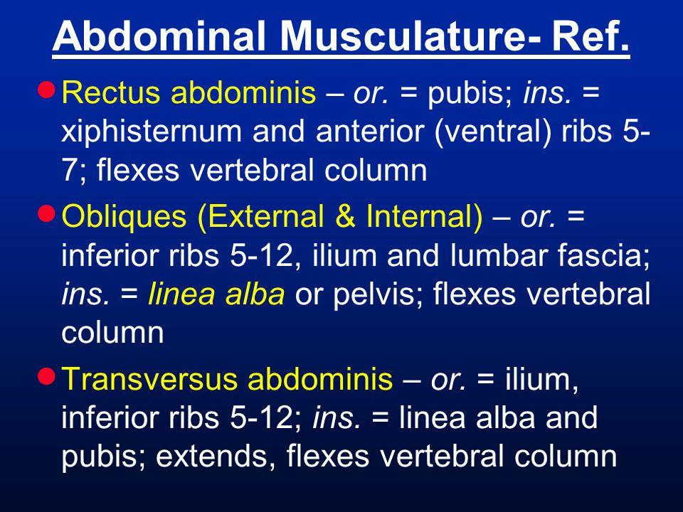 Abdominal Musculature- Ref.
