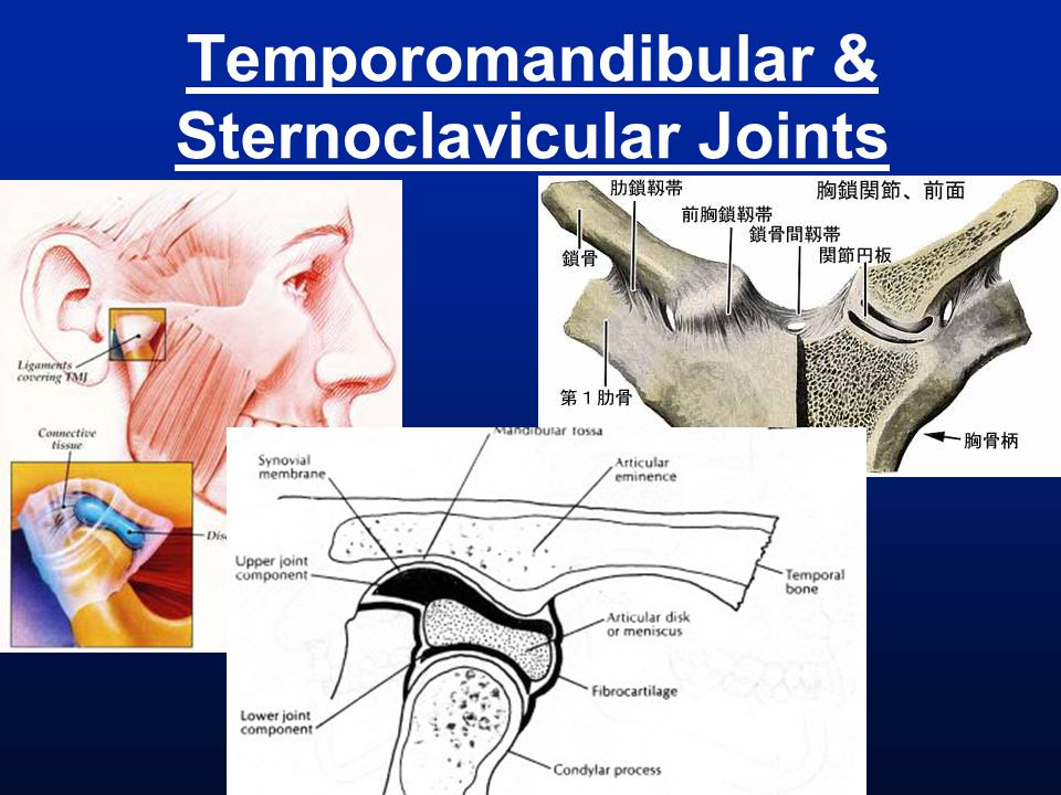 Temporomandibular & Sternoclavicular Joints