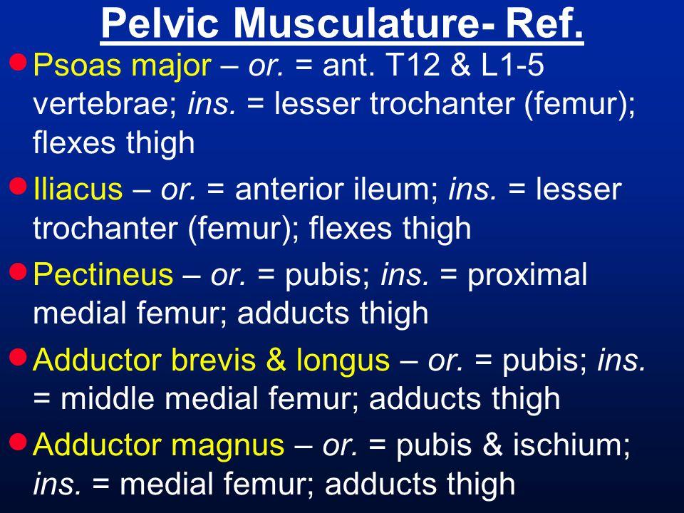Pelvic Musculature- Ref.