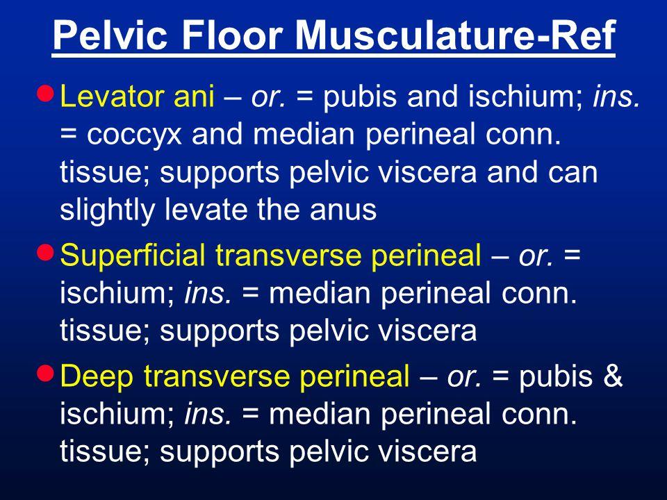 Pelvic Floor Musculature-Ref
