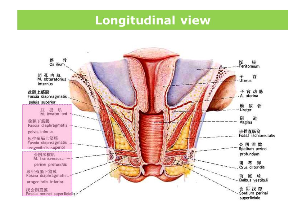Longitudinal view