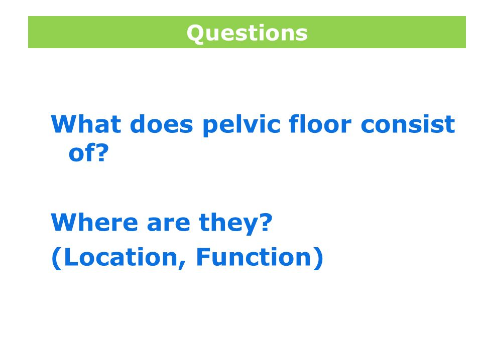 Questions What does pelvic floor consist of Where are they (Location, Function)