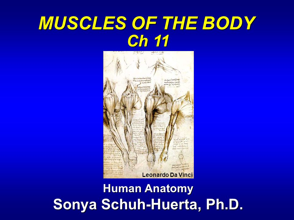 Sonya Schuh-Huerta, Ph.D.