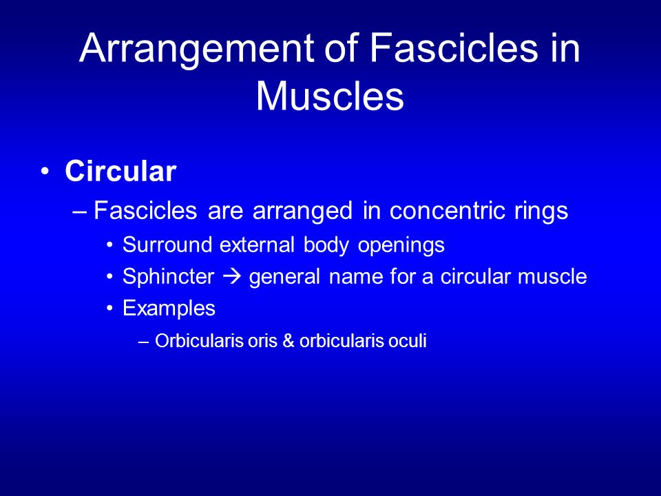 Arrangement of Fascicles in Muscles