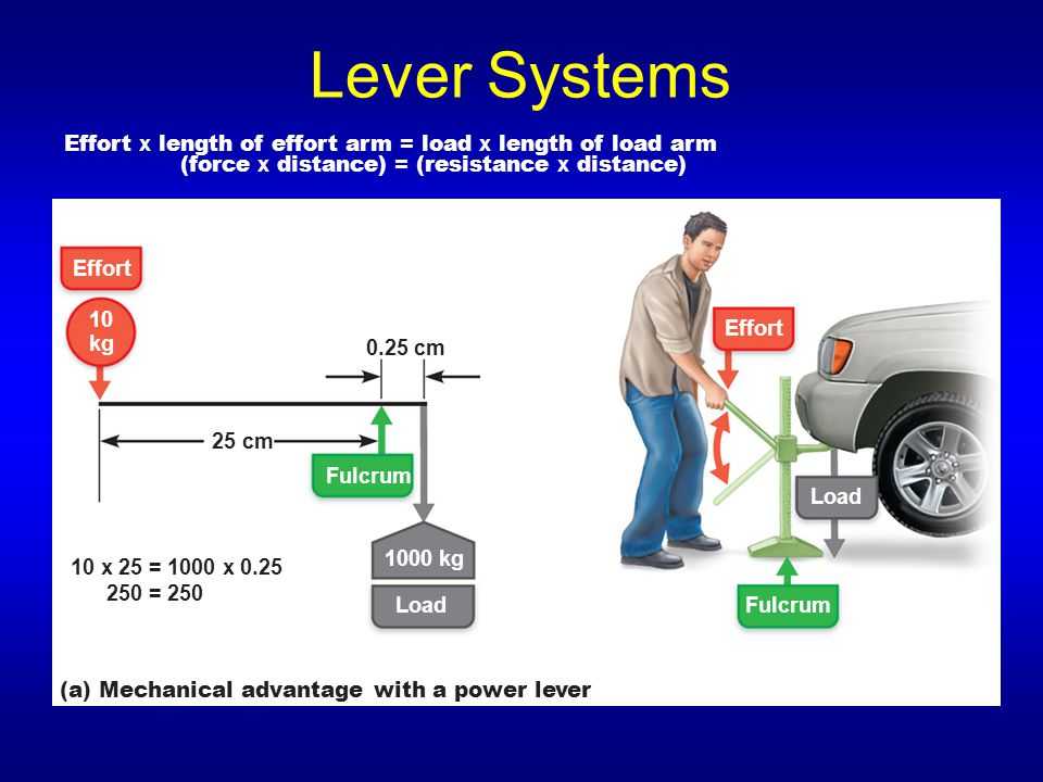 Lever Systems Effort x length of effort arm = load x length of load arm. (force x distance) = (resistance x distance)