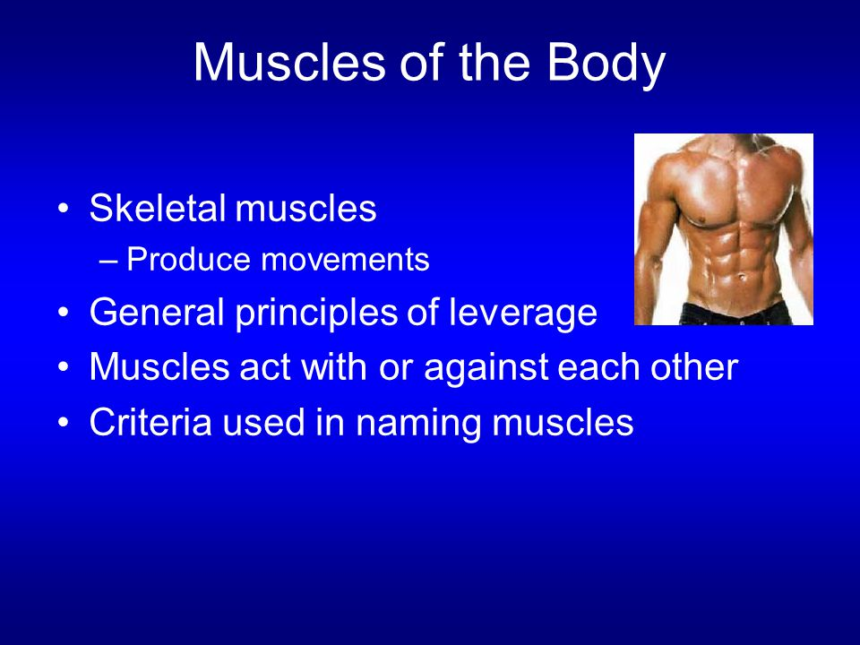 Muscles of the Body Skeletal muscles General principles of leverage