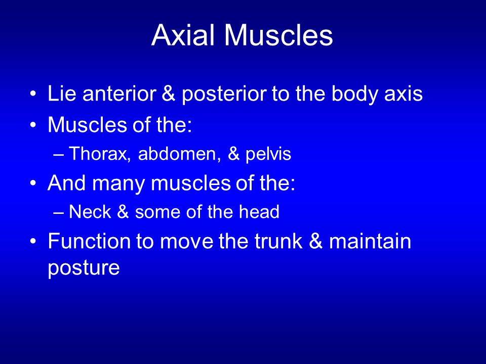 Axial Muscles Lie anterior & posterior to the body axis