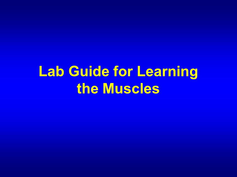 Lab Guide for Learning the Muscles