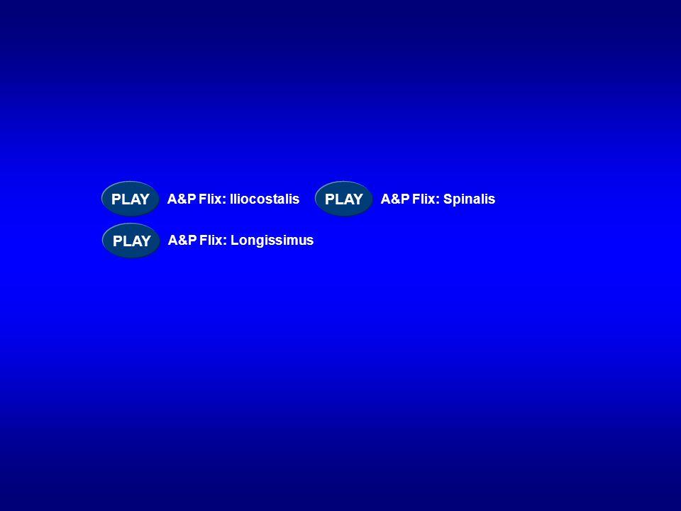 PLAY PLAY PLAY A&P Flix: Iliocostalis A&P Flix: Spinalis