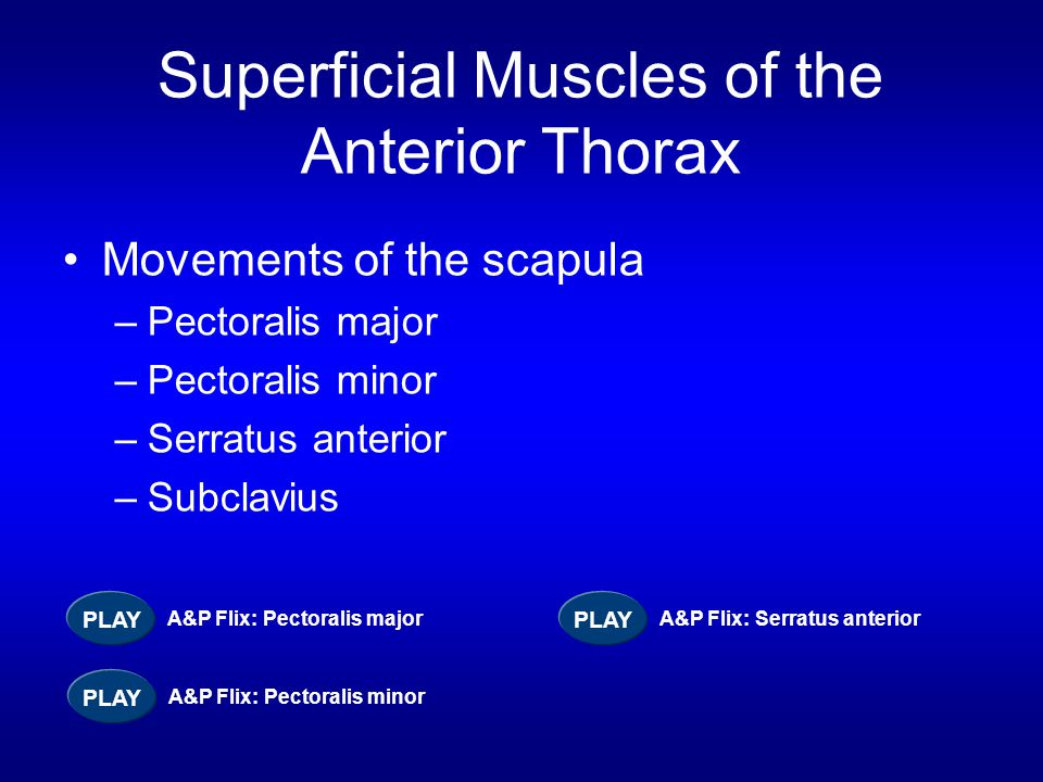 Superficial Muscles of the Anterior Thorax