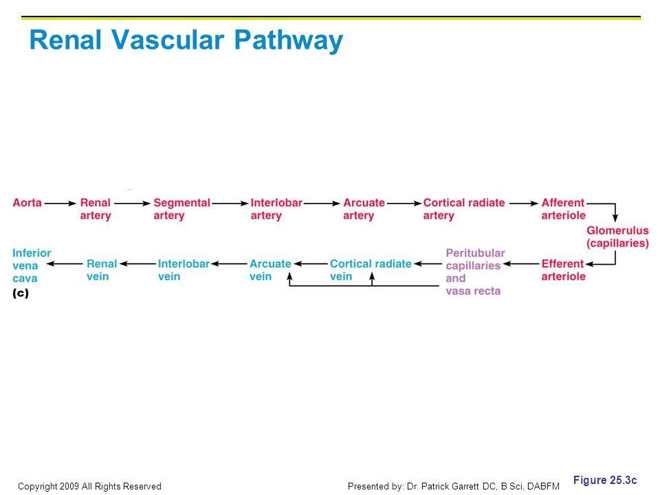 Renal Vascular Pathway