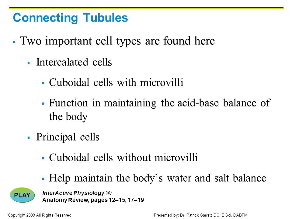 Two important cell types are found here