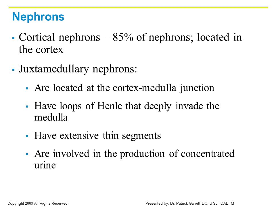 Cortical nephrons – 85% of nephrons; located in the cortex