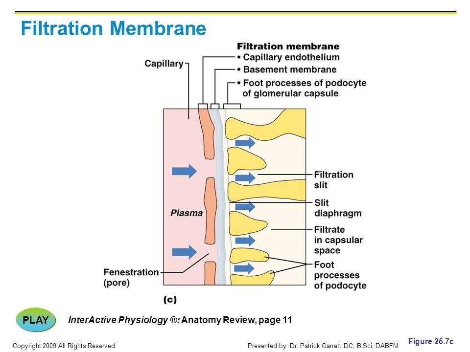 Filtration Membrane PLAY