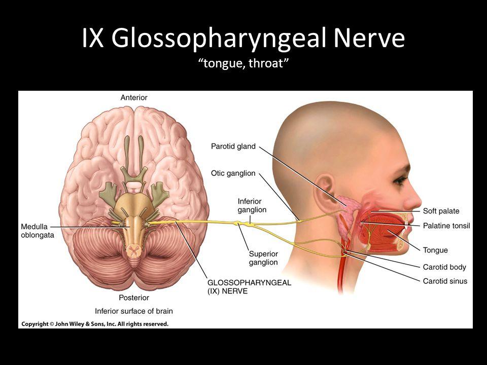 IX Glossopharyngeal Nerve tongue, throat