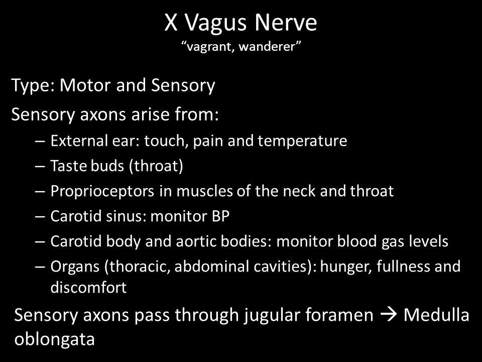 X Vagus Nerve vagrant, wanderer