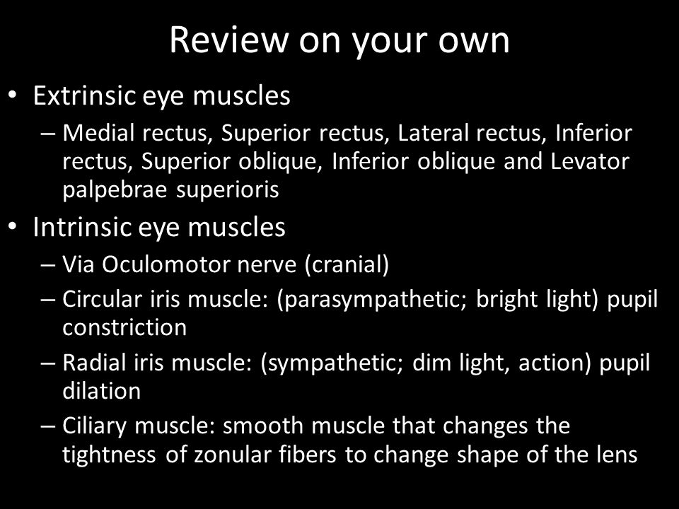 Review on your own Extrinsic eye muscles Intrinsic eye muscles