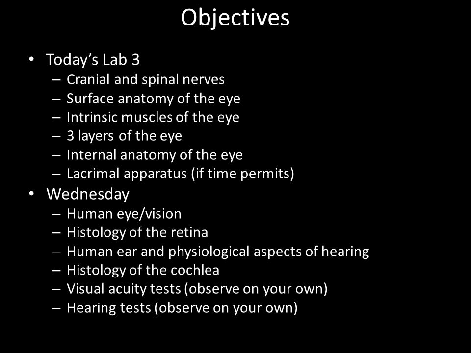 Objectives Today's Lab 3 Wednesday Cranial and spinal nerves