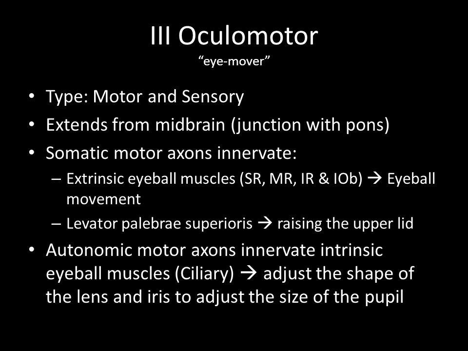 III Oculomotor eye-mover