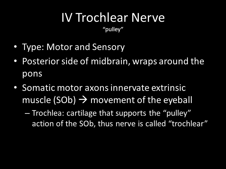 IV Trochlear Nerve pulley